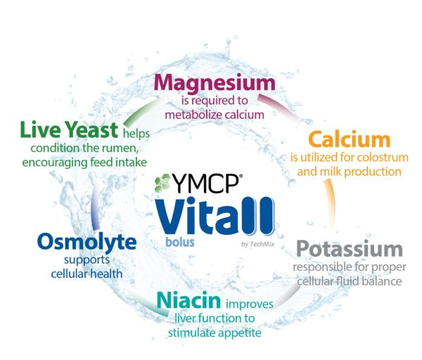 YMCP Vitall graphic